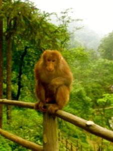攻击我的猴子