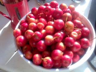 Crab apples in bowl